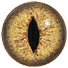 Yellow/Brown multicoloured Lizard or Snake eyes. Concave/convex reptile/dinosaur eye with a highly detailed colouration.