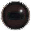Horse Eye with white banding, no blue glint