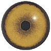 Lion Eye. A multicoloured eye with a round pupil in a concave/convex shape and an accurately painted iris.