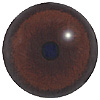 Special Offer -  Bear Eyes. A multicoloured eye with a round pupil in a concave/convex shape and an accurately painted iris.