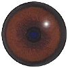 Bear Eyes. A multicoloured eye with a round pupil in a concave/convex shape and an accurately painted iris.