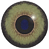 Mammal eyes. A multicoloured eye with a round pupil in a concave/convex shape and an accurately painted iris.