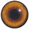Dog Eyes. A multicoloured eye with a round pupil in a concave/convex shape and an accurately painted iris.