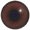 Special Offer - Elephant Eye.  A multicoloured eye with a round pupil in a concave/convex shape