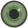 Green Mammal Eyes. A multicoloured eye with a round pupil in a concave/convex shape and an accurately painted iris.