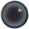 Blue Mammal Eyes. A multicoloured eye with a round pupil in a concave/convex shape and an accurately painted iris.