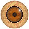 Mammal eyes code 190MB