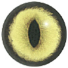 Green Cat Eye. A premium grade Fox/Cat eye with a slit pupil. An excelllent exhibition quality eye.