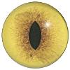 Lynx Bobcat Cat Eye. A premium grade Fox/Cat eye with a slit pupil. An excelllent exhibition quality eye.
