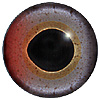 Special Offer - Rainbow Trout Eye - Multicolour