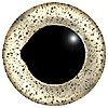 Special Offer - Silver Fish Eye. European style multicolour fish eyes on wire made by hand from crystal glass and painted and fired for a permanent finish.