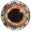 Multicolour Fish Eye. European style multicolour fish eyes on wire made by hand from crystal glass and painted and fired for a permanent finish.