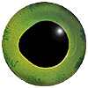 Green Fish Eye. European style multicolour fish eyes on wire made by hand from crystal glass and painted and fired for a permanent finish.