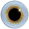 Blue/Gold Jay Eyes. This glass eye on wire has a multi-colour iris with a black pupil. Ideal for stickmaking and Decoy carving.