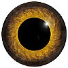 Special Offer Sparrowhawk Eyes Yellow Mix. This glass eye on wire has a multi-colour iris with a black pupil. Ideal for stickmaking and Decoy carving.