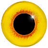Yellow with Red Pupil Rim Bird Eyes. This glass eye on wire has a multi-colour iris with a black pupil. Ideal for stickmaking and Decoy carving.