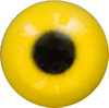 Yellow Acrylic eyes. This revolution in bird eye technology was created by award winning taxidermist Erling Morch. Created in crystal clear acrylic  this natural looking eye has an accurately blended iris and a beautifully feathered pupil set at the corr