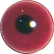 Red Oyster Catcher eyes. This revolution in bird eye technology was created by award winning taxidermist Erling Merch. Created in crystal clear acrylic  this natural looking eye has an accurately blended iris and a beautifully feathered pupil set at the
