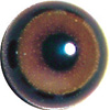 Buzzard Acrylic eyes. This revolution in bird eye technology was created by award winning taxidermist Erling Merch. Created in crystal clear acrylic  this natural looking eye has an accurately blended iris and a beautifully feathered pupil set at the cor