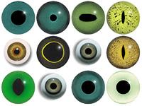 Explore green eyes